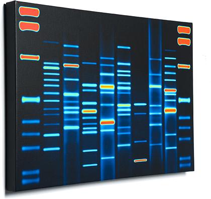 DNA11