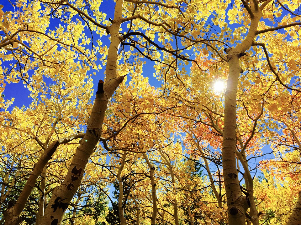 NATURAL REMEDIES FOR FALL ALLERGIES