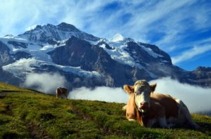 Nature - Switzerland